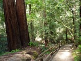 San Fran–Day 5: Muir Woods, Ferry Bldg, & Brazilian Steakhouse