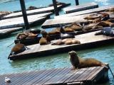 San Fran–day 6: Fisherman's Wharf
