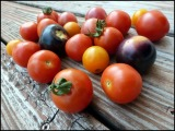 Photo of the Week–Juicy Tomatoes