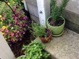 Meet My HerbGarden