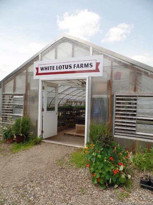 White Lotus Farmsann Arbor Mi Meg Goes Nom Nom